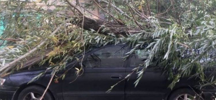 Пошкодження авто деревом: як відшкодувати шкоду?