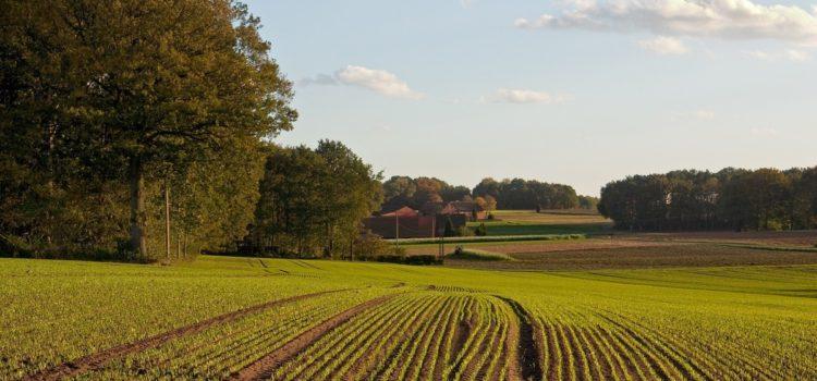 Земельный участок: регистрация прав, приватизация
